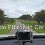 Wilde Pferde im Bodmin Moor Cornwall
