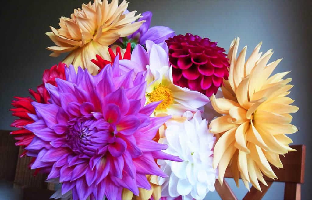 Dahlien Blumen Arrangement