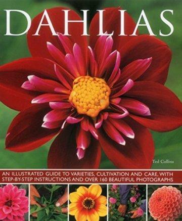 Dahlias - 1
