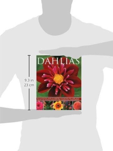 Dahlias - 2