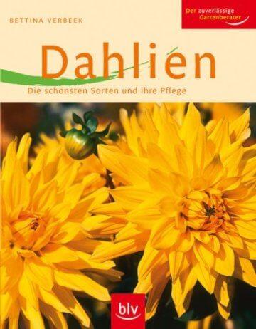 Dahlien: Die schönsten Sorten und ihre Pflege - 1
