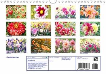 Dahliensommer (Wandkalender 2020 DIN A4 quer): Dahlien, die begeistern (Monatskalender, 14 Seiten ) (CALVENDO Natur) - 2