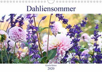 Dahliensommer (Wandkalender 2020 DIN A4 quer): Dahlien, die begeistern (Monatskalender, 14 Seiten ) (CALVENDO Natur) - 1
