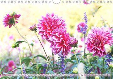 Dahliensommer (Wandkalender 2020 DIN A4 quer): Dahlien, die begeistern (Monatskalender, 14 Seiten ) (CALVENDO Natur) - 5