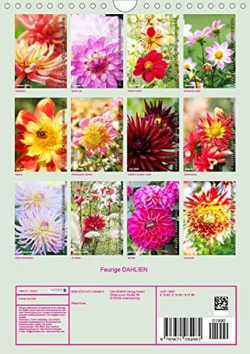 Feurige Dahlien (Wandkalender 2020 DIN A4 hoch): Strahlend schöne Spätsommerblumen (Monatskalender, 14 Seiten ) (CALVENDO Natur) - 2