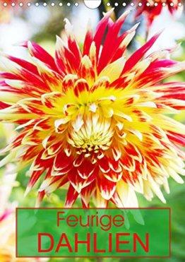 Feurige Dahlien (Wandkalender 2020 DIN A4 hoch): Strahlend schöne Spätsommerblumen (Monatskalender, 14 Seiten ) (CALVENDO Natur) - 1
