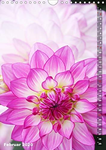 Feurige Dahlien (Wandkalender 2020 DIN A4 hoch): Strahlend schöne Spätsommerblumen (Monatskalender, 14 Seiten ) (CALVENDO Natur) - 4
