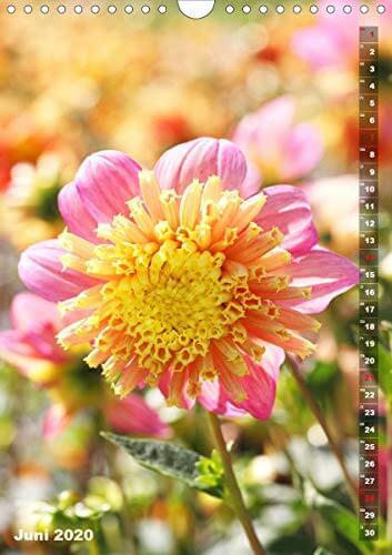 Feurige Dahlien (Wandkalender 2020 DIN A4 hoch): Strahlend schöne Spätsommerblumen (Monatskalender, 14 Seiten ) (CALVENDO Natur) - 8
