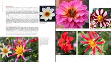 Plant Lovers  Guide to Dahlias (Plant Lover S Guides) - 4