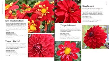 Plant Lovers  Guide to Dahlias (Plant Lover S Guides) - 6