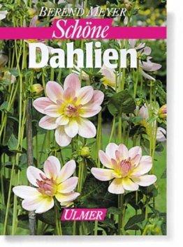 Schöne Dahlien - 1