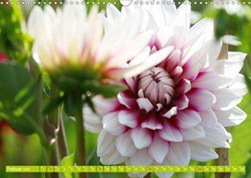 Wunderbare Dahlienwelt (Wandkalender 2020 DIN A3 quer): Die Königin des Spätsommers in farbenfroh leuchtenden Fotografien (Monatskalender, 14 Seiten ) (CALVENDO Natur) - 4